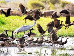 Borradaile birds