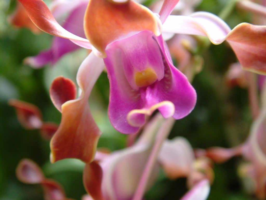 Stunning Orchid