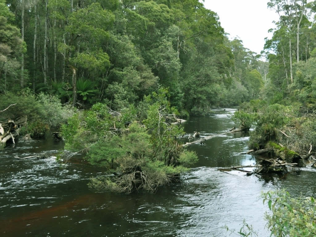 Remote Stream Tarkine