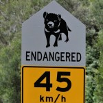 An unusual sign to protect the endangered Tassie Devil in the remote Tarkine Wilderness.